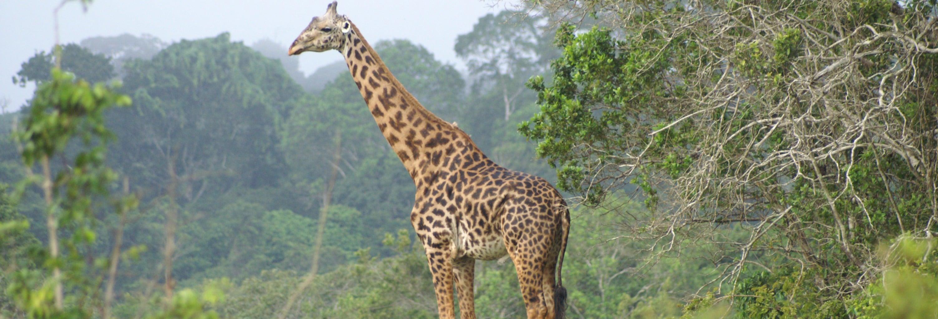 Shimba Hills Safari