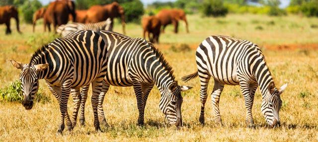 Safari de 6 días por Amboseli, Tsavo East y Tsavo West