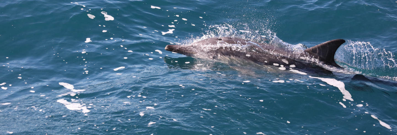 Avvistamento di delfini + Snorkeling sull'isola di Wasini