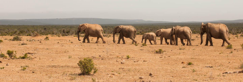 Safari dans le parc national de Tsavo East