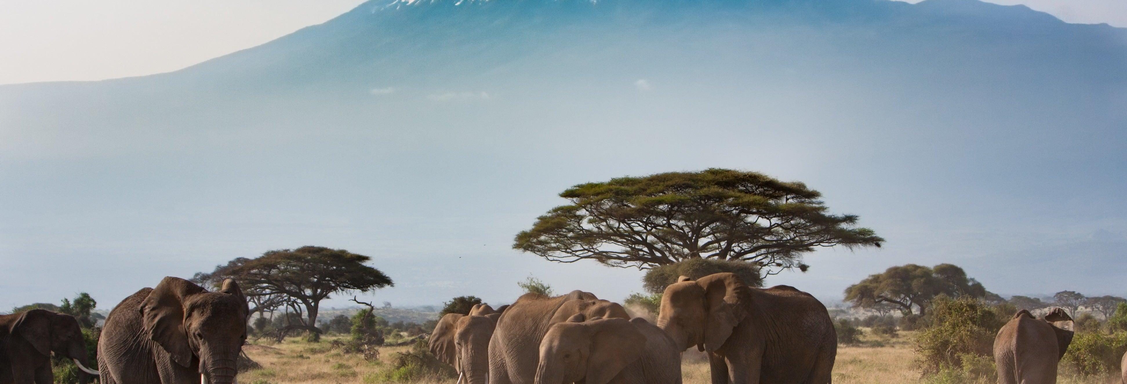 Safári de 2 dias pelo Parque Nacional de Amboseli