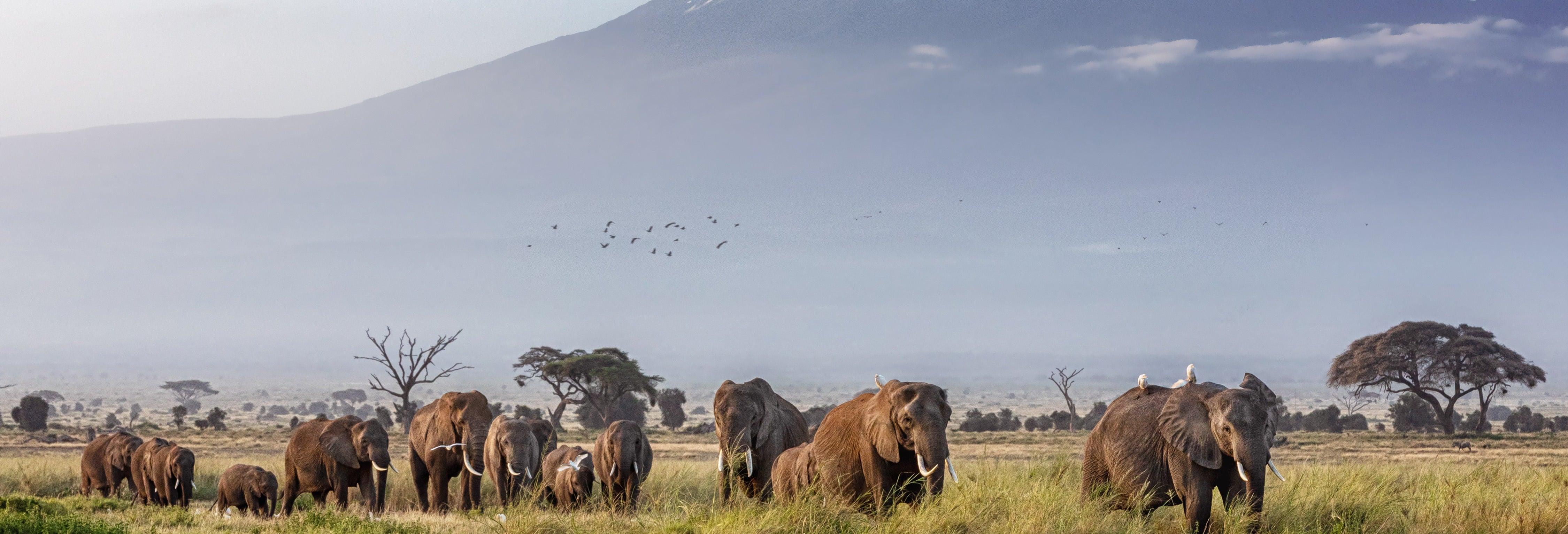 Amboseli National Park Safari: 3 Days