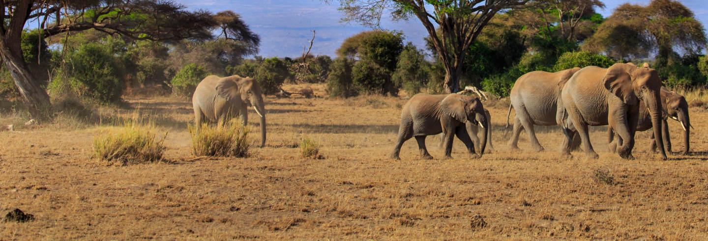 Safari por el Parque Nacional de Amboseli