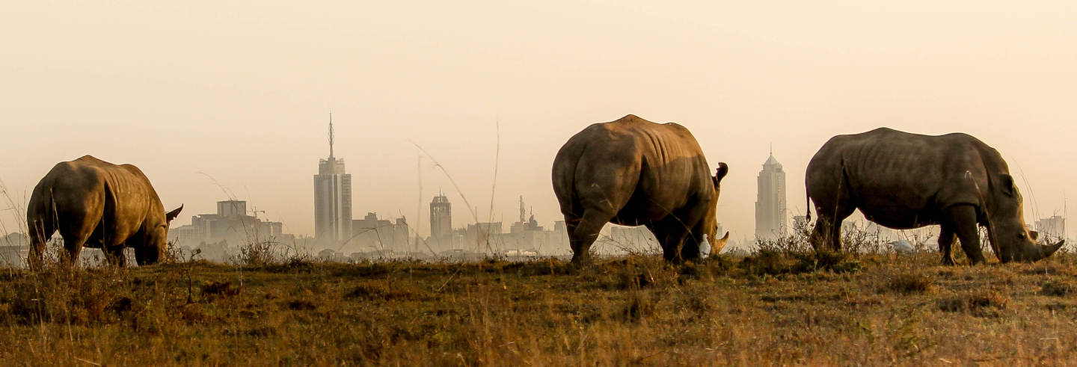 Safari por el Parque Nacional de Nairobi
