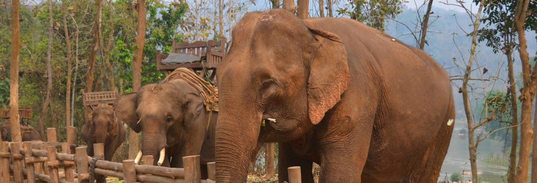Campamento de elefantes, cuevas de Pak Ou y río Mekong