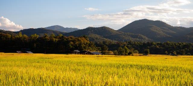 Excursión a los arrozales de Sekinchan