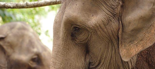 Excursión al santuario de elefantes y las Cuevas Batu