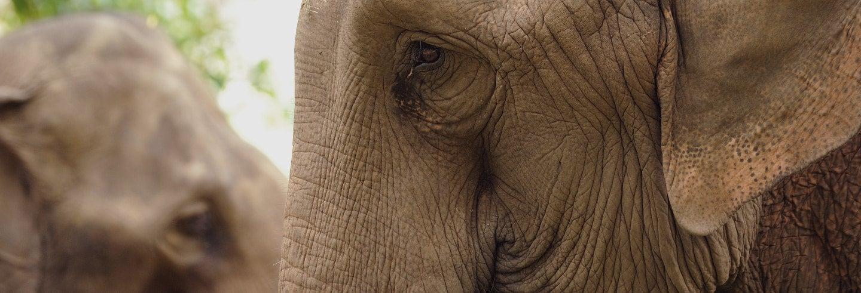 Excursion au sanctuaire des éléphants et aux Grottes de Batu