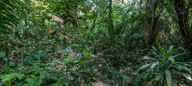 Excursión a las selvas de Kuala Lumpur
