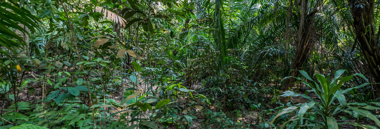 Excursão às selvas de Kuala Lumpur