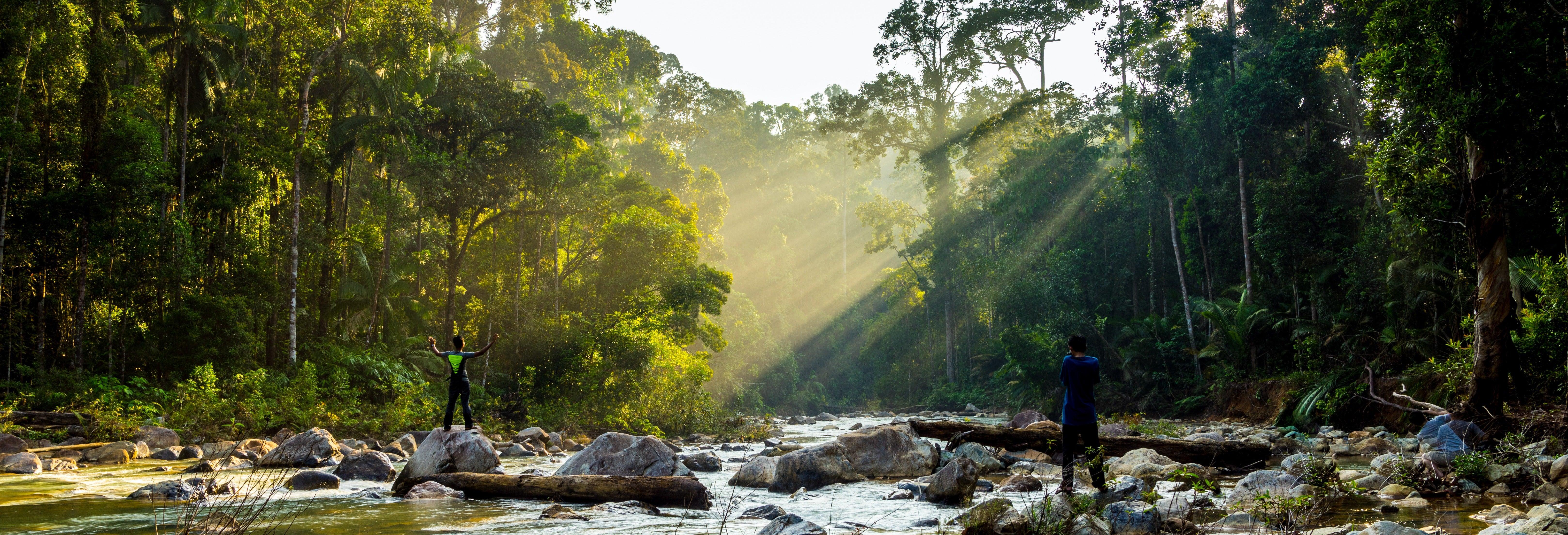Excursion dans la jungle Taman Negara