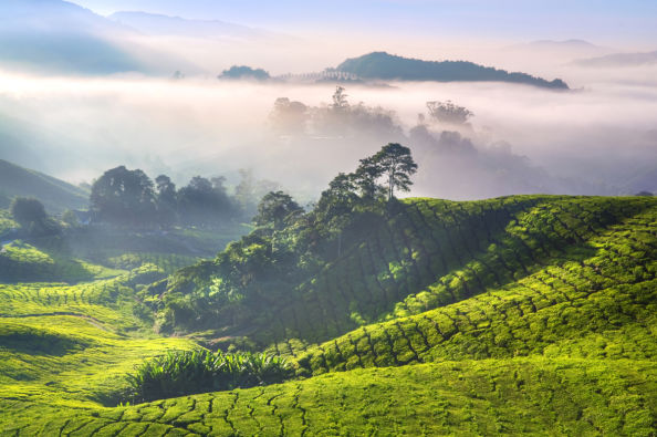 Panoramica delle Cameron Highlands