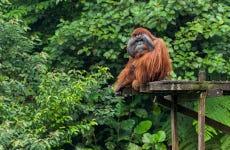 Excursión a Kubah + Matang Wildlife Centre