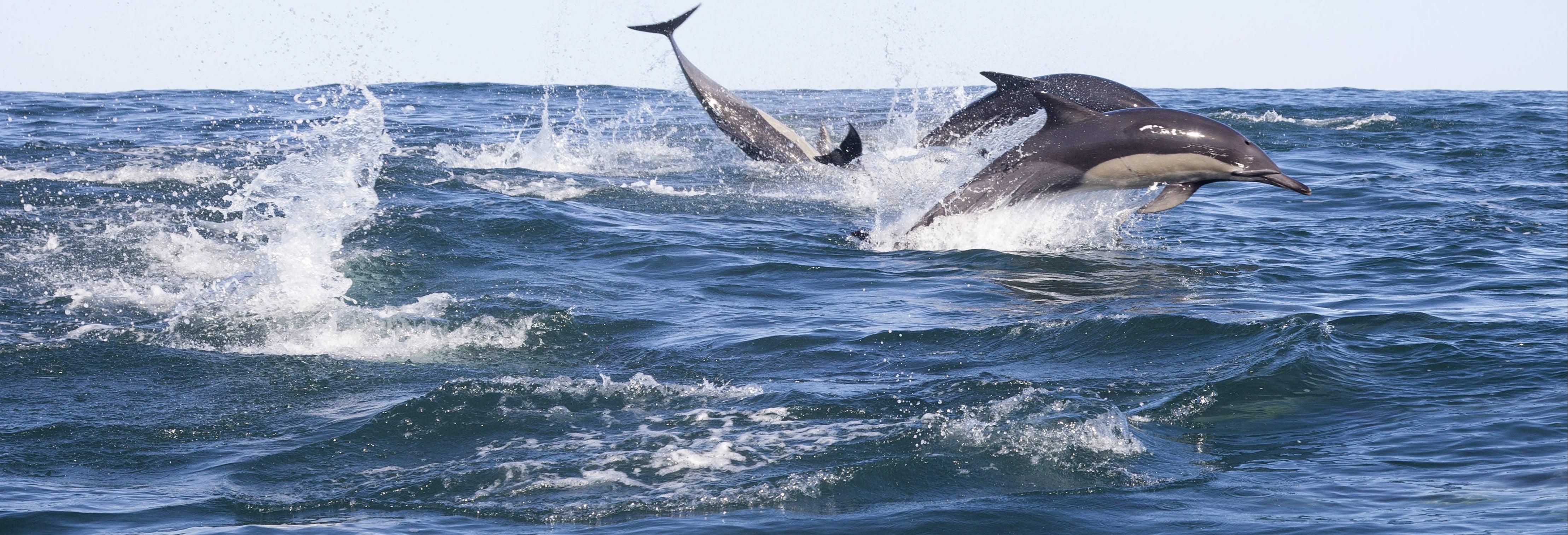 Avistamento de golfinhos em Addu