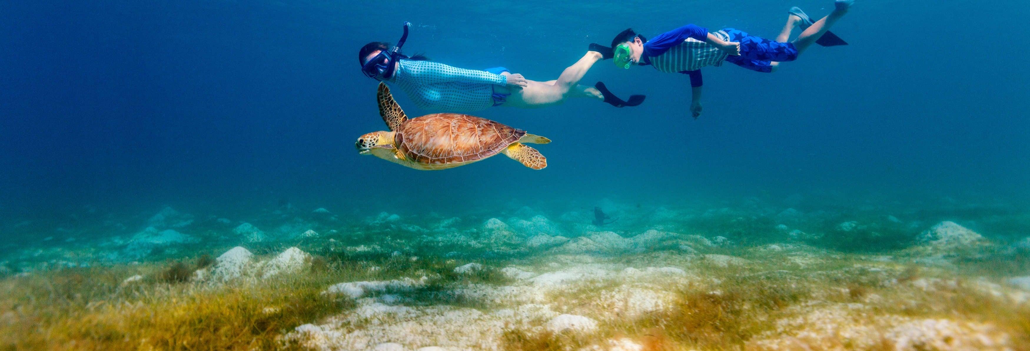 Snorkel con tortugas y mantarrayas