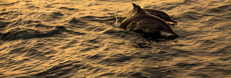Avistamiento de delfines en Dhiffushi