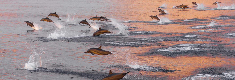 Avistamento de golfinhos em Huraa