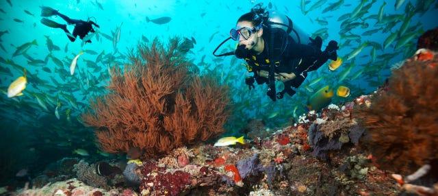 Buceo en Maafushi