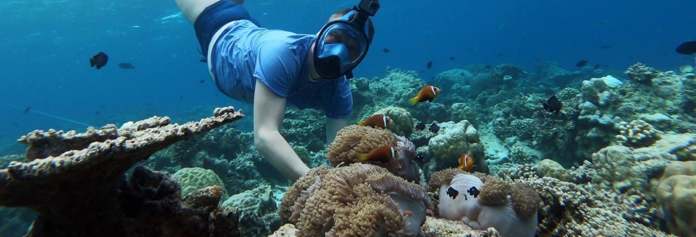 Snorkeling a Maafushi + Avvistamento di delfini