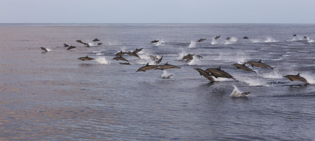 Malé Dolphin Watching