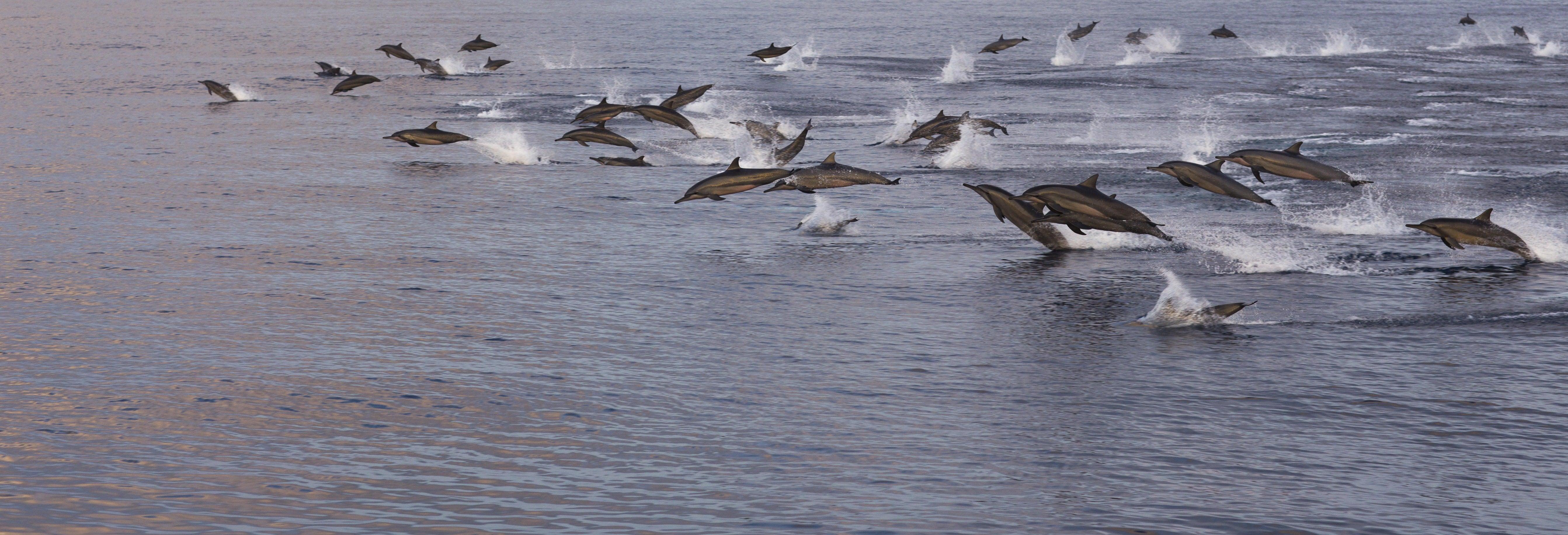 Avvistamento di delfini a Malé