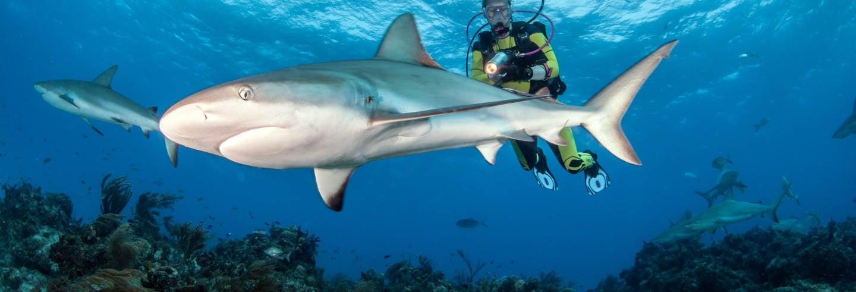 Mergulho com tubarões em Rasdhoo