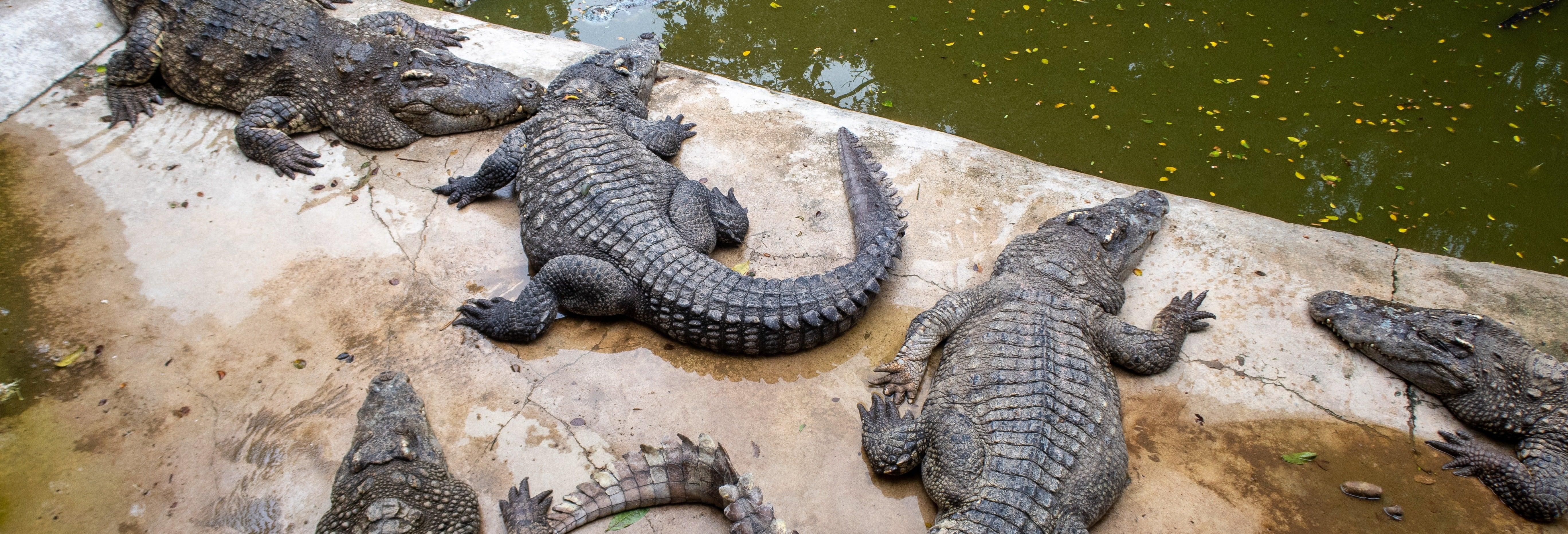 Intalnire gratuita Agadir.