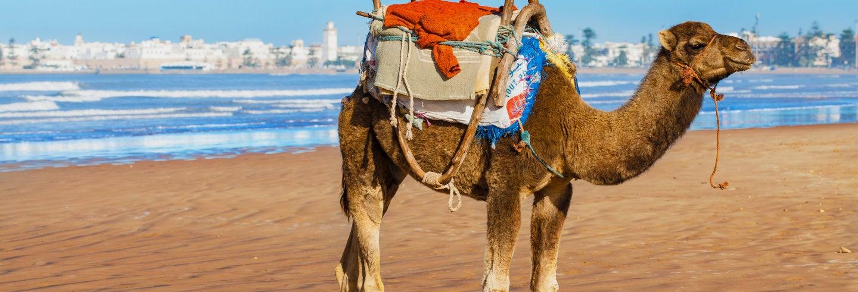 Tour en quad + Paseo en camello