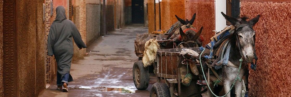 Transporte de Fez