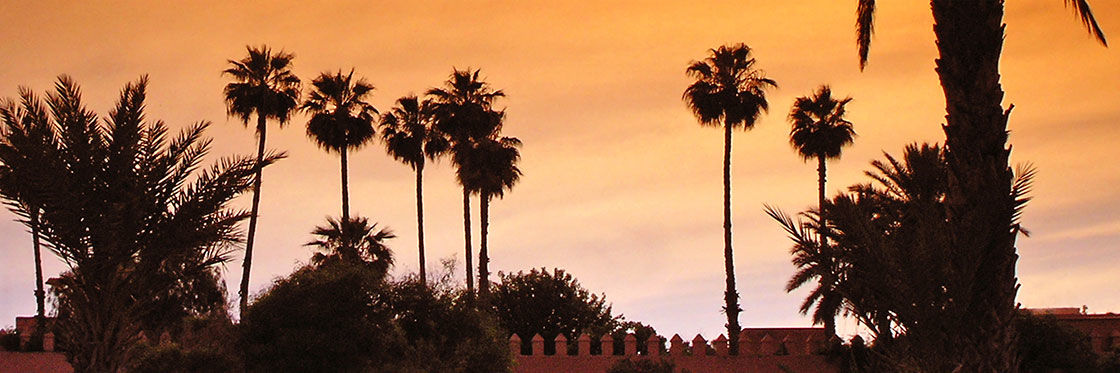Marrakech's Palm Grove
