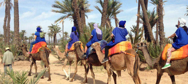 Paseo en camello por el palmeral