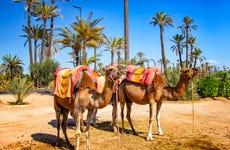 Oferta: Tour en quad + Paseo en camello