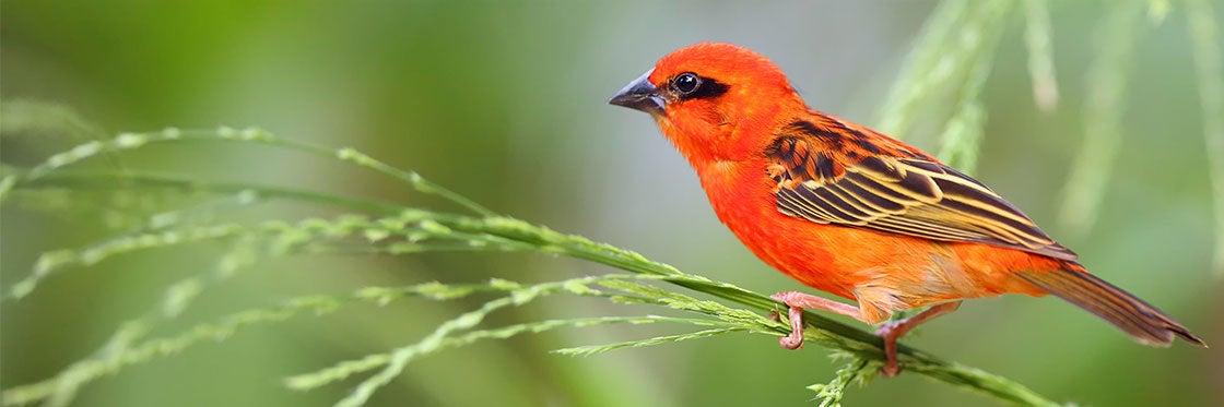 Flora y fauna de Isla Mauricio