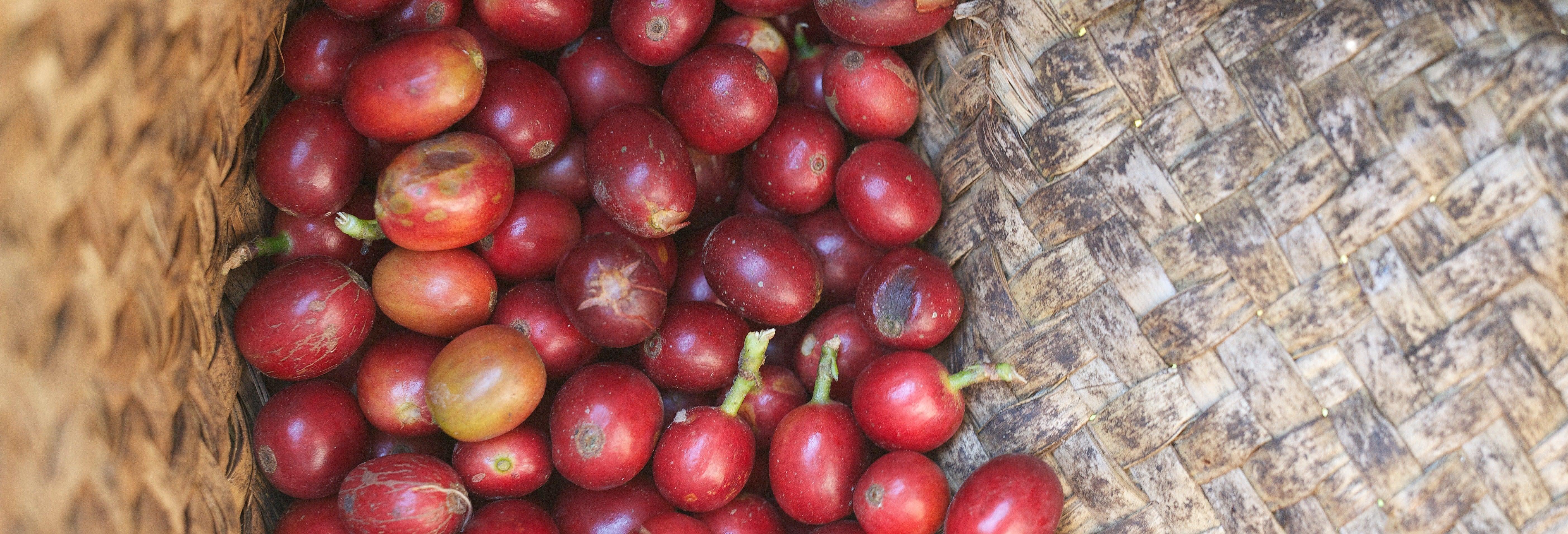 Tour del caffè a Coatepec