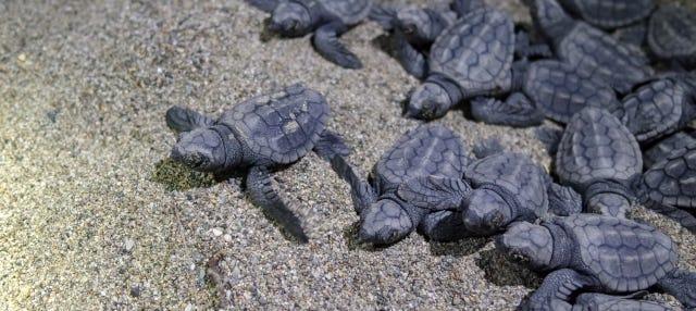 Avvistamento serale di tartarughe