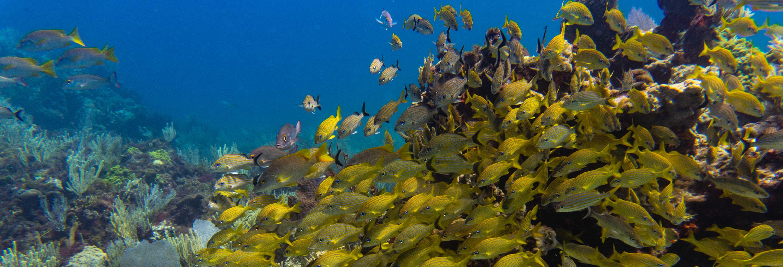 Scuba Diving Introduction