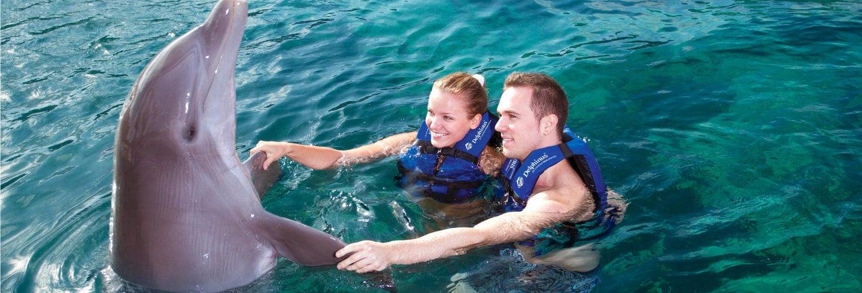 Nadar com golfinhos + Roda-Gigante de Cancún