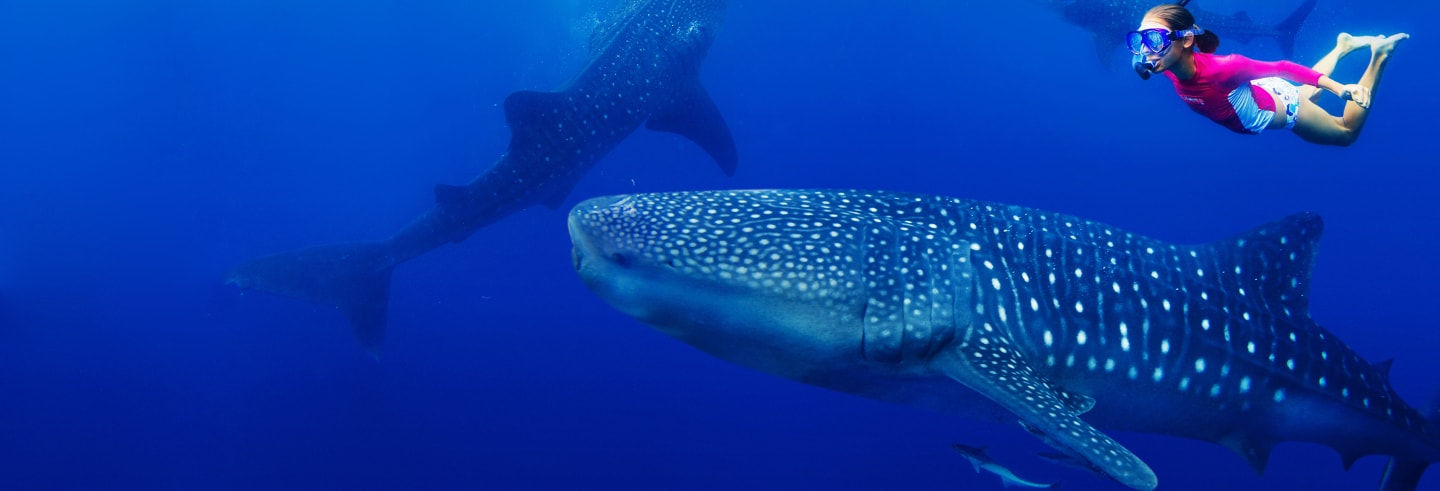 Swimming with Whale Sharks + Isla Mujeres Tour