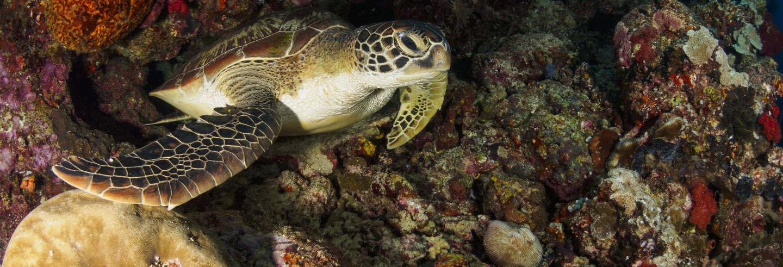 Snorkel nocturno en Cancún