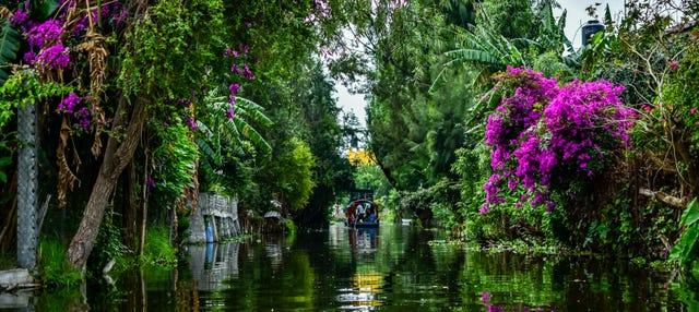 Tour por Xochimilco y barrio de Coyoacán