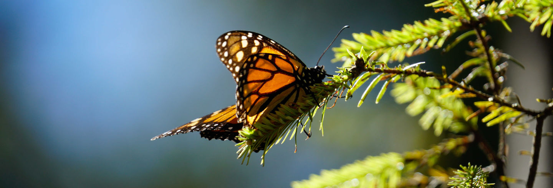 Excursión al Valle de Bravo y santuario de mariposas monarca