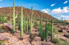 Tour de 3 días por el desierto de Sonora