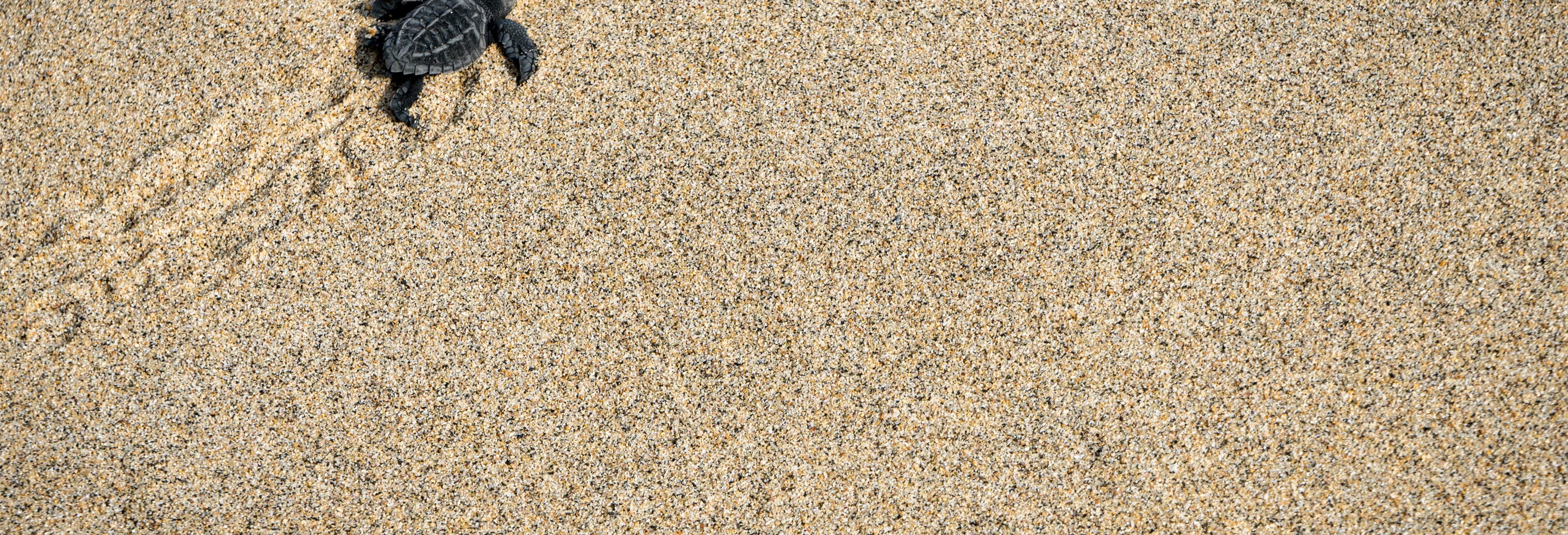 Liberación de tortugas en Puerto Escondido desde Huatulco