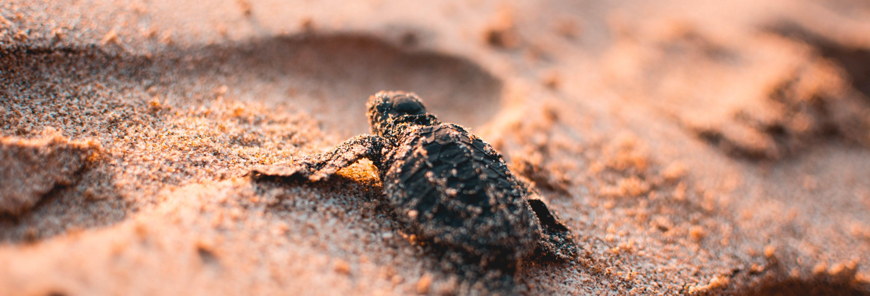 Liberación de tortugas en Ixtapa Zihuatanejo