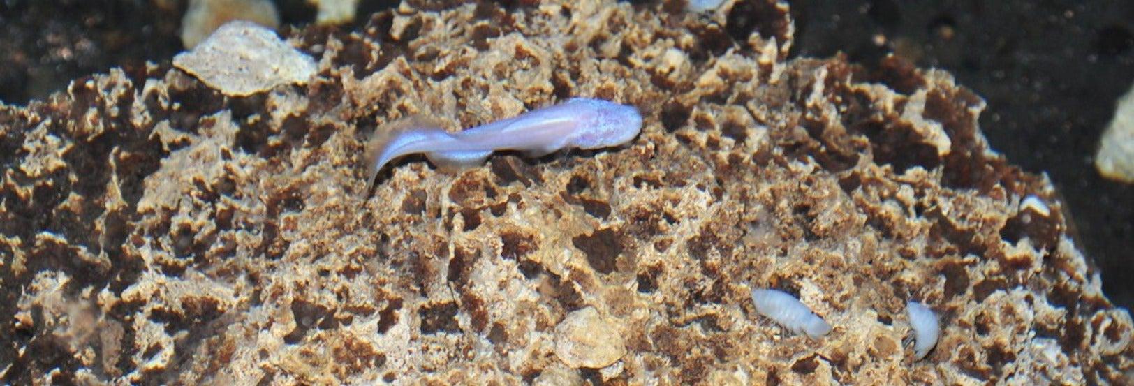 Excursión por la cueva de las Serpientes Colgantes desde Kantemó