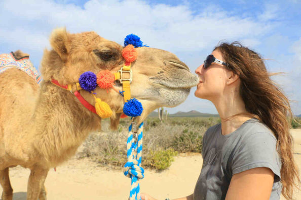 Meeting the camels