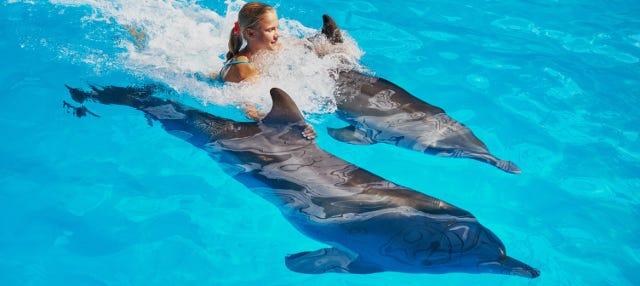 Nadar com golfinhos em Los Cabos