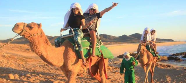 Passeio de camelo pelo deserto de Los Cabos