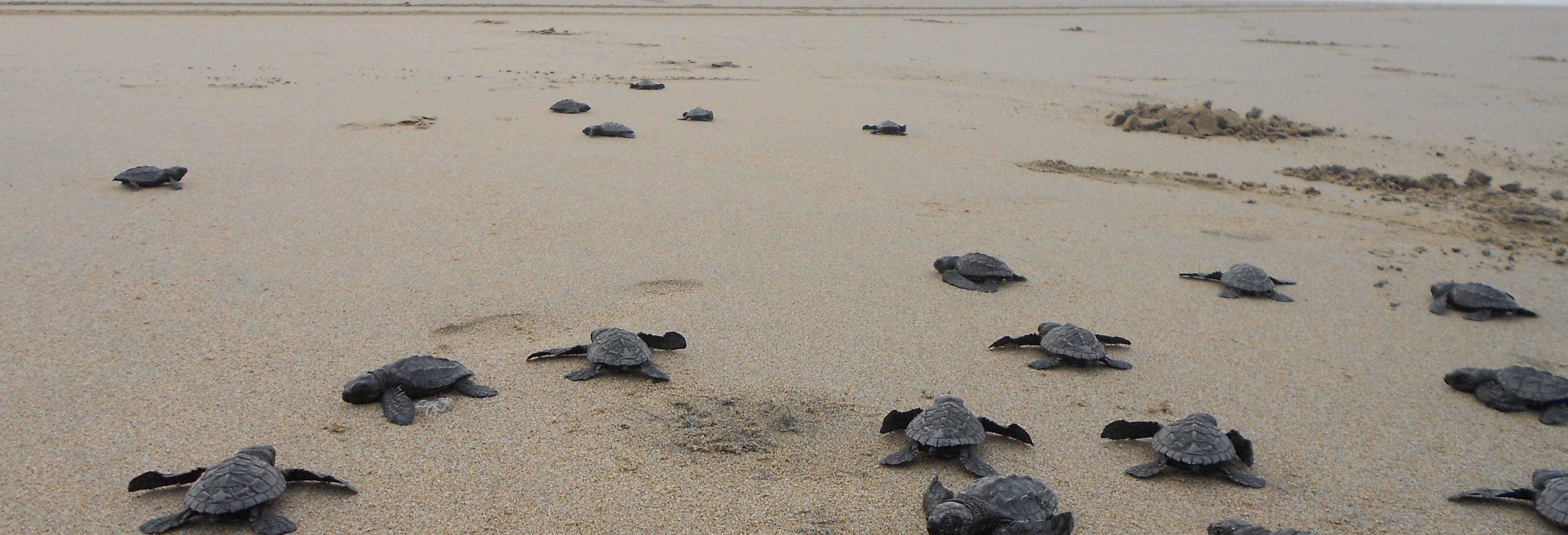 El Verde Camacho Sea Turtle Sanctuary Trip