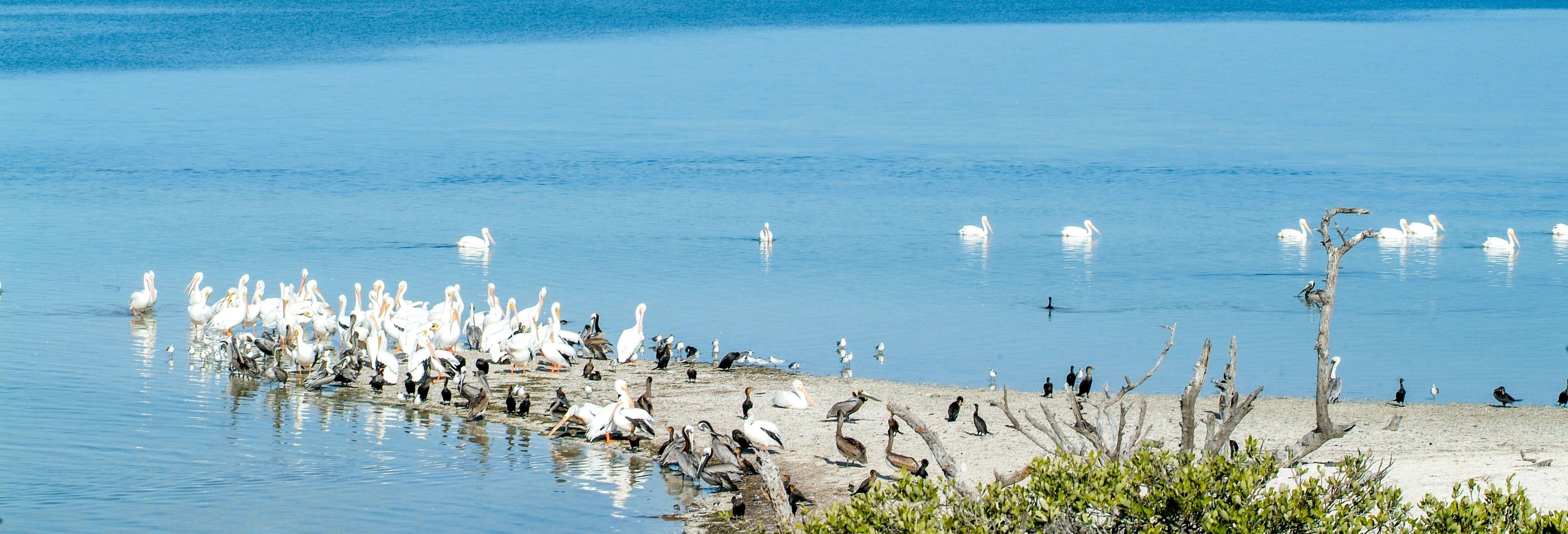 Kayak y snorkel en Isla de Pájaros